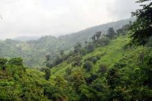 কেওক্রাডং এবং তাজিংডং দেখে আসুন