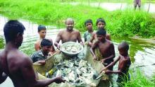 মাছ উৎপাদন বাড়াতে সরকারের ২০ প্রকল্প
